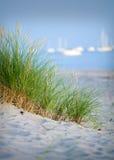 Groene riet en ocean.GN stock foto's