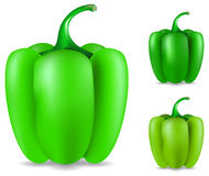 Groene rijpe peper Stock Afbeelding