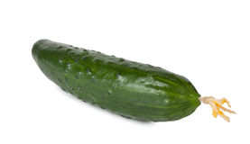 Groene rijpe sappige komkommer Stock Afbeelding