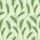 Groene rijst Royalty-vrije Stock Afbeelding