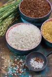 Groene rijstoren van Camargue-padievelden in Frankrijk en valiety stock foto's