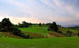 Groene rijstterrassen stock fotografie