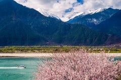 Groene rivier in de lente royalty-vrije stock foto's