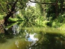 Groene rivier in de zomer Royalty-vrije Stock Foto's