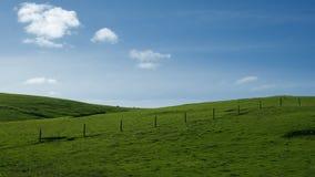 Groene rollende heuvels Stock Foto