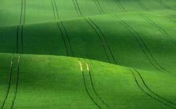 Groene rollende heuvels van tarwe die op ribfluweel met lijnen lijken die zich in de afstand uitrekken Stock Foto's