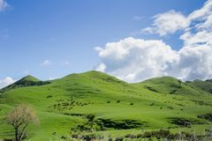 Groene rollende landbouwgrond stock afbeeldingen