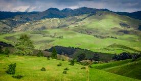 Groene Rolling Heuvels van Californië dichtbij Cambria Stock Foto