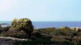 Groene Rotsen op het strand stock video