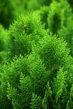 Groene ruimte Stock Fotografie