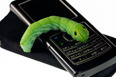 Groene rupsband Royalty-vrije Stock Fotografie