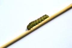 Groene rupsband Royalty-vrije Stock Afbeelding