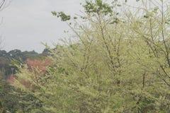 Groene sakurabloemen royalty-vrije stock afbeeldingen