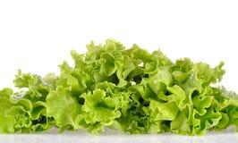 Groene salade die op een wit wordt geïsoleerd stock foto