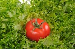 Groene salade met rode tomaat royalty-vrije stock fotografie