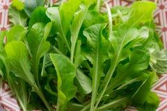 Groene saladebladeren Stock Foto