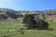 Groene Savana met blauwe hemel stock fotografie