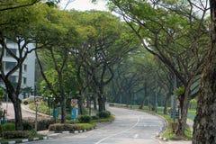 Groene schaduwrijk van Singapore op de Technologische Universiteit van Nanyang Stock Afbeeldingen