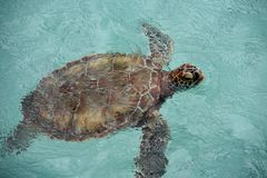 Groene Schildpad Stock Fotografie