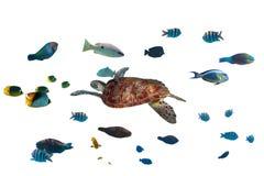 Groene schildpad en tropische vissen Stock Foto's