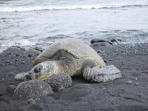 Groene schildpad op rotsen Stock Afbeeldingen