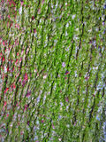 Groene schors Stock Foto's