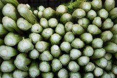 Groene Selderie Stock Foto