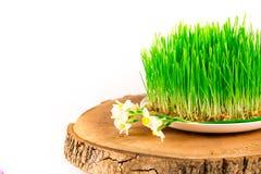 Groene semeni op houten die stomp, met uiterst kleine gele narcissen wordt verfraaid Royalty-vrije Stock Afbeelding