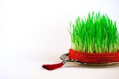 Groene semeni op uitstekende die plaat, met draai rood lint en rode leeswijzer wordt verfraaid Royalty-vrije Stock Afbeeldingen