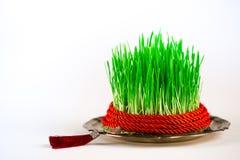 Groene semeni op uitstekende die plaat, met draai rood lint en rode leeswijzer wordt verfraaid Royalty-vrije Stock Foto