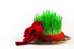Groene semeni op uitstekende die plaat, met draai rood lint en rode leeswijzer wordt verfraaid Royalty-vrije Stock Fotografie