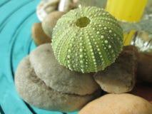 Groene shell Royalty-vrije Stock Fotografie