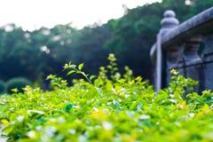 Groene shrubbery royalty-vrije stock fotografie
