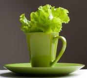 Groene sla in een mok Stock Afbeeldingen