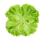 Groene slabladeren Stock Foto