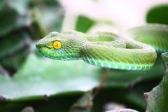 Groene slang Stock Foto