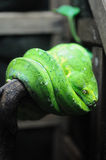 Groene slang Royalty-vrije Stock Foto