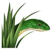 Groene slang achter het gras royalty-vrije illustratie