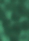 Groene slanghuid Stock Illustratie
