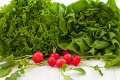 Groene slasalade en rode radijs Royalty-vrije Stock Afbeeldingen
