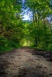 Groene sleep in het bos stock foto