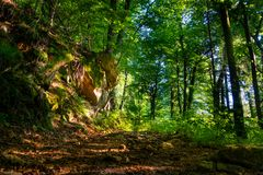 Groene sleep in het bos royalty-vrije stock afbeelding