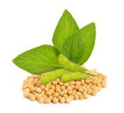 Groene sojapeulen met bladeren en zaden Royalty-vrije Stock Afbeelding