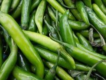 groene Spaanse peper Stock Afbeeldingen