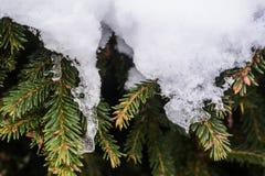 Groene sparappel en naalden onder de sneeuw Royalty-vrije Stock Afbeeldingen