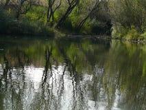 groene spiegels in het bos stock afbeelding