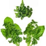Groene spinazie en peterselie Royalty-vrije Stock Fotografie