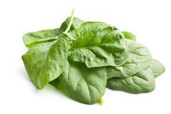 Groene spinaziebladeren Stock Foto's