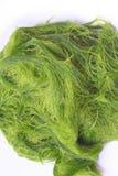 Groene spirogyra is zoet wateralgen heeft zeer hoog die calcium en beta-carotene, voor het koken wordt gebruikt, het is populair  royalty-vrije stock foto