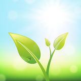 Groene Spruit Royalty-vrije Stock Fotografie